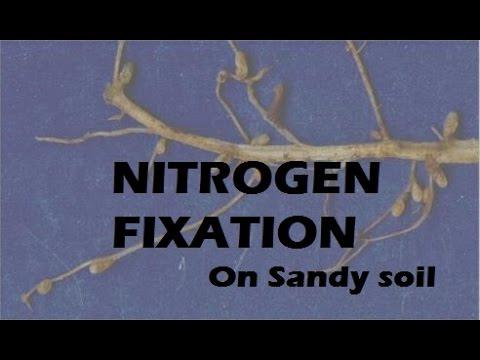 Part 2: Remediating Sandy Soil, Nitrogen Fixation