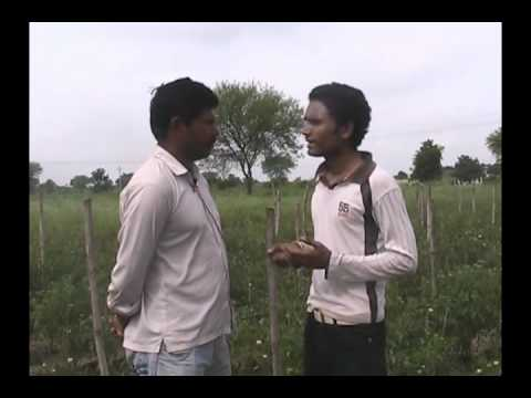 control of blight diseases in tomato Hindi Acceess Madhyapradesh
