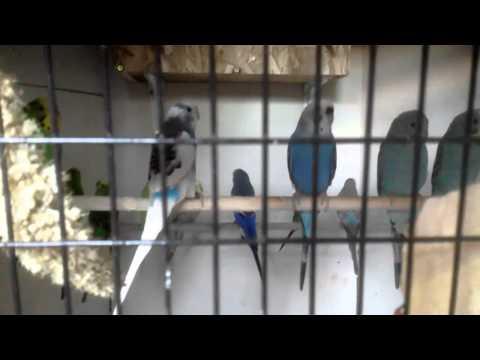 Hexagonal parakeet aviary update