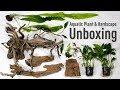 Aquatic Plant & Hardscape Unboxing from H2O Plants