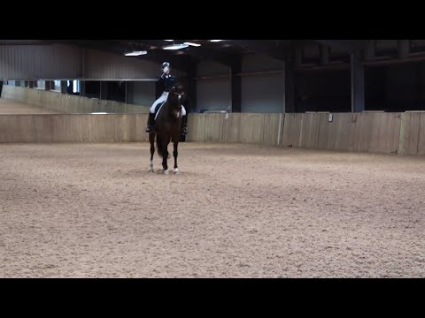 HOW TO RIDE A HOT HORSE IN A DRESSAGE TEST | OTD Test review