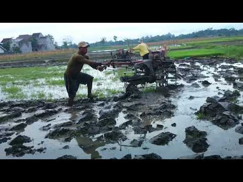 processing of rice fields in Indonesia