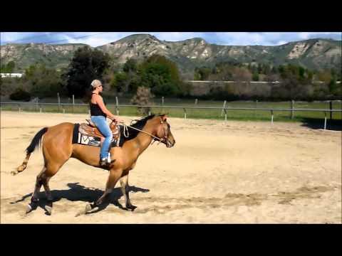 Dun Quarter Horse gelding for sale in California