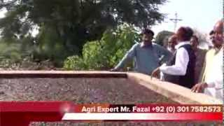 Agri Expert Mr Fazal discussion on Organic Fertilizers for growing Crops 6 Oct 2013 Khanewal
