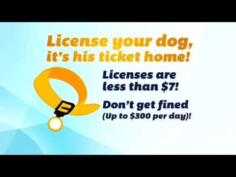 Dog License in Allegheny County, PA.