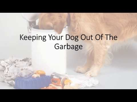How to Keep Your Dog Out of the Garbage