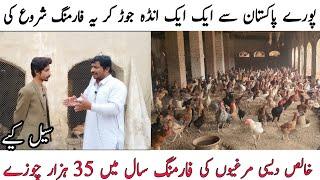 Pure Desi hen farming in pakistan|Asad Abbas Chishti|