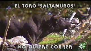 Toro saltamuros de Cayetano Muñoz se escapa del corredero | Toros desde Andalucía