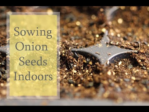 Sowing Onion Seeds-Growing Onions From Seeds
