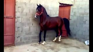 hisan gharib  2012