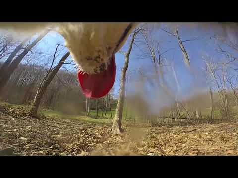 Dog Entertainment - Dog Relaxation - Dog Music with our Husky Dog Zarros while Free Ranging - Part 2