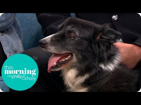 The Sniffer Dog Traumatised by the Manchester Terror Attack | This Morning