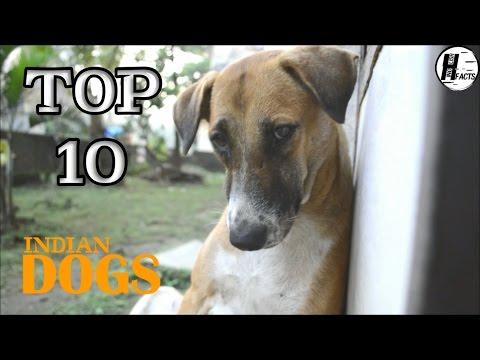 Top 10 INDIAN DOG BREED | Hindi | TOP 10 LIST | HINGLISH FACTS