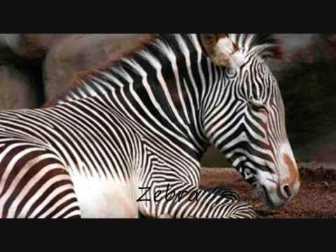 Endangered animals - Hunter