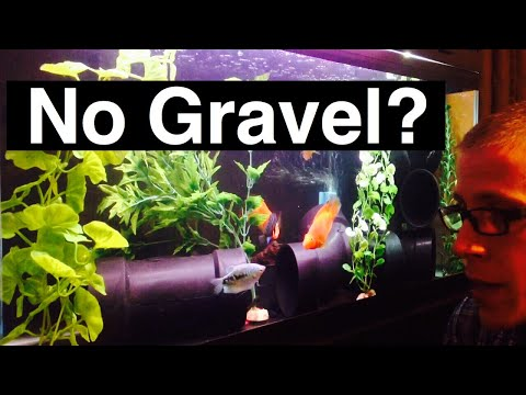 No Gravel Aquarium or No Substrate in Fish Tank?