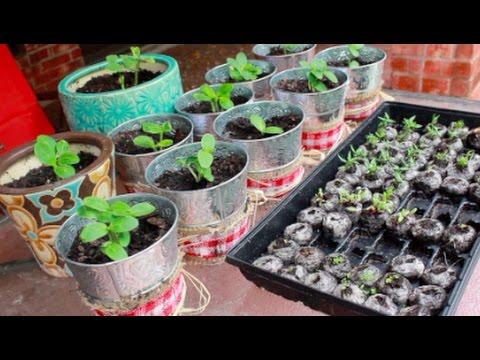 How We Started A Super Affordable Spring Garden!