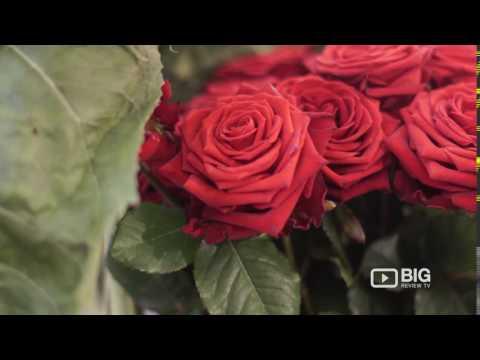 Galton Flowers Shop London for Florist and Floral Designs