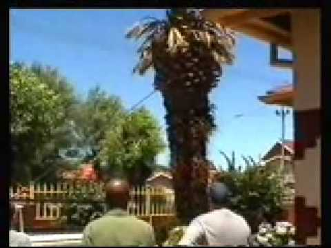 How Not To Remove A Palm Tree From Your Yard