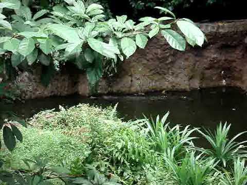 Sentosa Island-Singapore Zoo (Part 1)