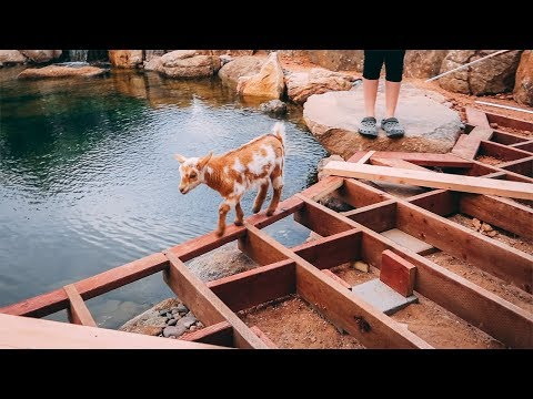 Pond Deck's almost FINISHED! (will our littlest inspector approve?)