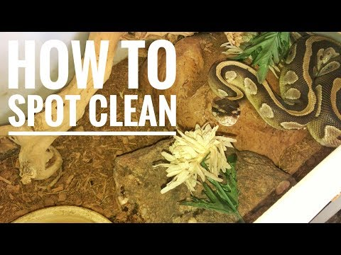 How To Spot Clean A Snake Enclosure