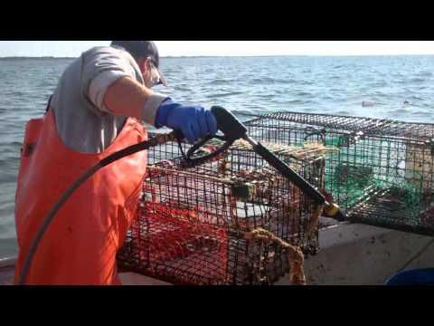 Pressure Washing Lobster Traps