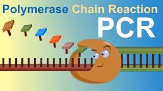 PCR - Polymerase Chain Reaction (IQOG-CSIC)