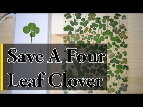 How to Save a Four Leaf Clover