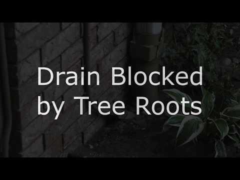 Blocked Drain in Building 5