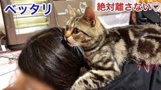 Download 妹の背中を乗り物にしてベッタリと甘えまくる猫w Video