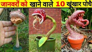दुनिया के सबसे खतर नाक पौधे जो जानवरों को भी खा जाते है   Top 10 Carnivorous Plants That Eat Animals