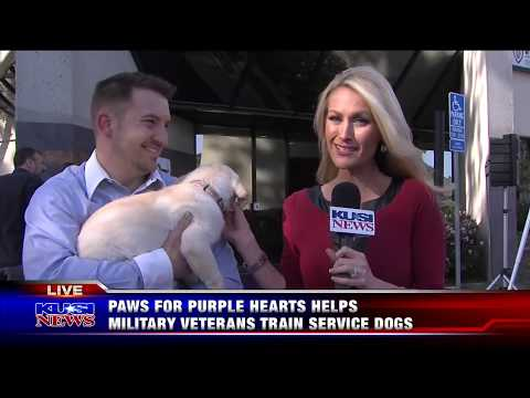 KUSI Evening News Features Paws for Purple Hearts