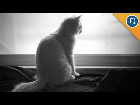 Do Cats Experience Grief?