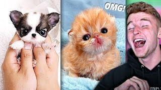 Download Try Not To Say AWW Challenge.. (VERY HARD) Video