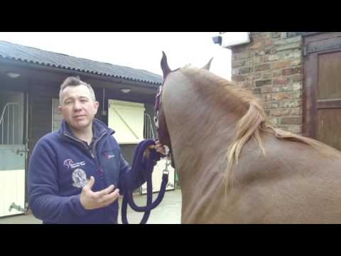 Equine Worms - Treatment and Control