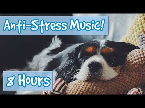 Have the Most Relaxed Dog! Relaxing Music for Easily Stressed Dogs, Nervous Dogs. Help Dogs Sleep!