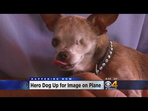 Hero Dog Up For Image On Frontier Plane