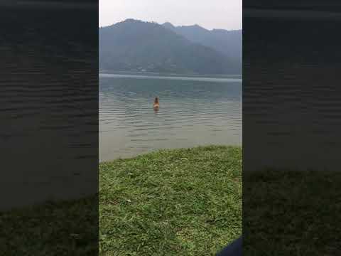 Xxx Mp4 Sex Attempt In Nepal Phewa Lake Pokhara Sex Attempts 3gp Sex
