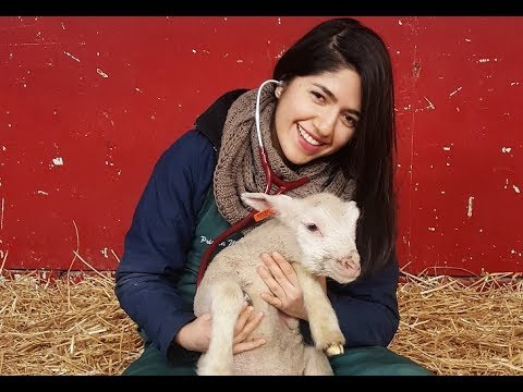 Life of a vet med student   Lambing adventure