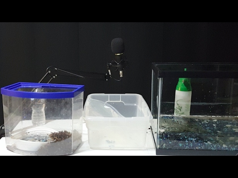 [LIVE Replay] Snapping Turtle Enclosure Setup