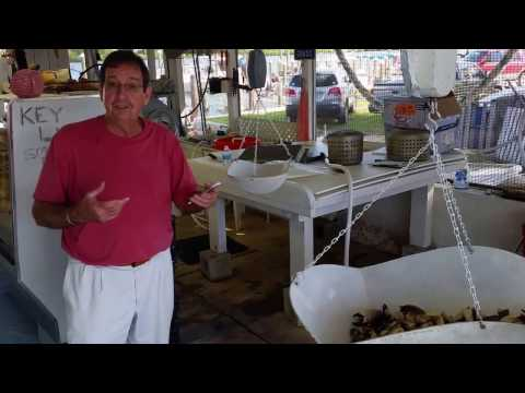 Best place to buy Stone crabs in Florida Keys