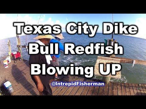 Huge Bull Redfish blow up chasing down some mullet - Texas City Dike Fishing