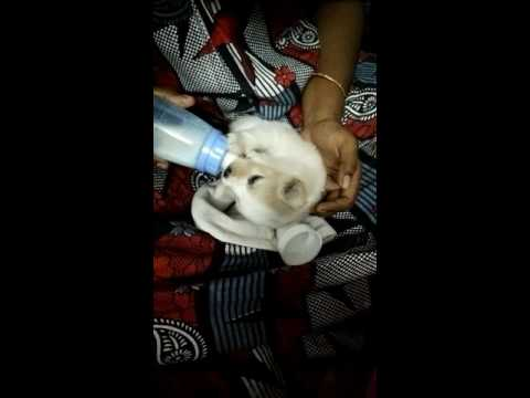 New born baby dog(Chotu) feeding for first time HD