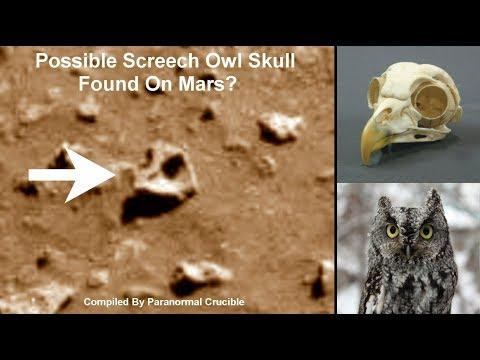 Possible Screech Owl Skull Found On Mars?