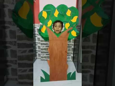 Raheel mango tree