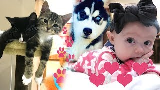 Kittens, Puppies and Cute Baby