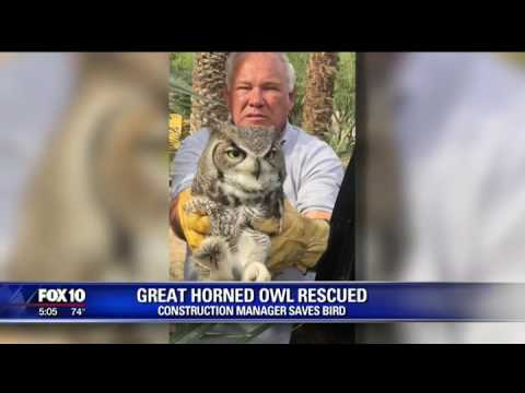 0311074 Construction Workers Rescue An Accidentally Poisoned Owl