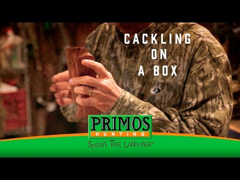 Will Primos' Favorite Turkey Call - The Excited Cackle