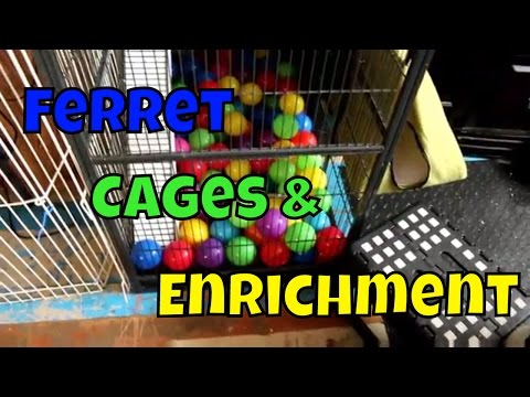 Ferret Cage & Enrichment - Ferret Care VOL. 1