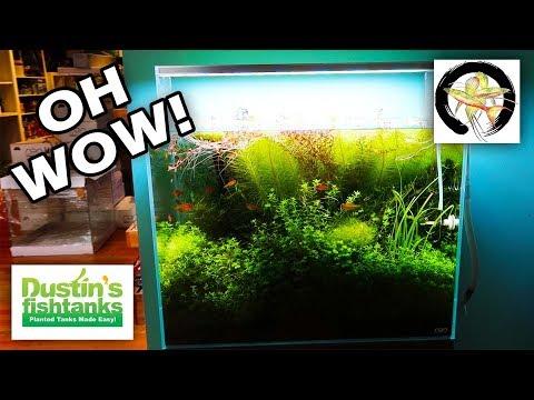 AMAZING AQUARIUM SHOP: Aquarium Zen Tour Part 1
